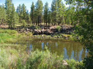 Wetlands near Cheshire Park, along Rio de Flag, Flagstaff, Arizona