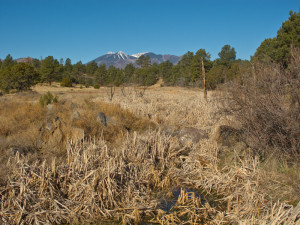 Rio de Flag at Logan's Crossing, Nov. 27, 2011, Coconino National Forest, in Cosnino area of eastern Flagstaff