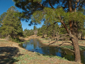Picture Canyon, May 15, 2011, after stream meander restoration of Rio de Flag, Flagstaff